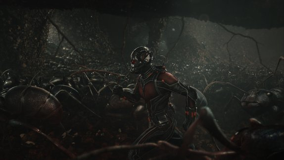 Ant Man - Ant Man and ant colonies